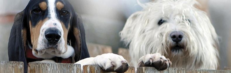 Urlaub mit hund – ferienhäuser in dänemark